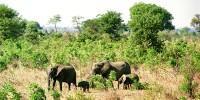 В Эфиопии слон убил испанского туриста