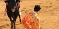 Защитники животных хотят запретить корриду в Португалии