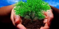 Акция по посадке деревьев в Кашкайше – для всех желающих