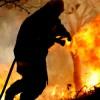 В Португалии уничтожено 118 тысяч гектаров лесов