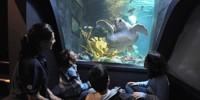На морских черепах можно посмотреть в лиссабонском океанариуме