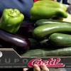 В Мадриде раздавали овощи всем желающим