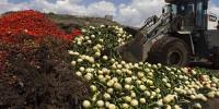 Испания требует 80 миллионов за «овощной скандал»