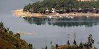 Полиция Португалии ищет крокодила