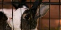 У итальянки в «Пулково» отобрали кролика