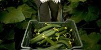 Роспотребнадзор разрешил ввоз овощей из Италии
