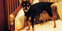 Русская семья в Италии пообещала 10 тыс евро за их пропавшую собаку