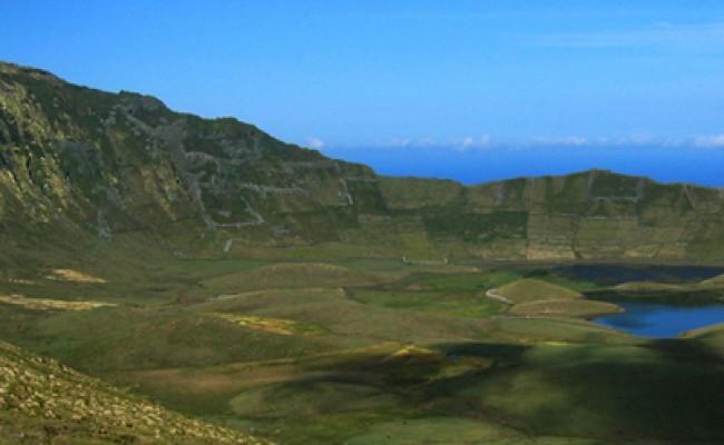 Гнездовья птиц на Азорских островах будут защищать от хищников