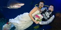 В Испании предлагают провести свадьбу в окружении акул