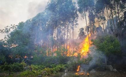 Португалия: четверо арестованы по подозрению в поджоге леса
