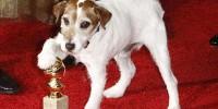 Голливуд с ажиотажем ухватился за учреждение собачьего «Оскара»