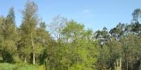 Заключенные в Португалии будут чистить лес