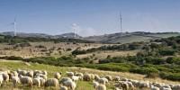 Пастухов на Сардинии разогнали слезоточивым газом