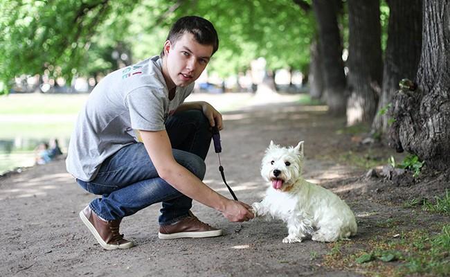 Владельцев собак в Барселоне штрафуют все чаще