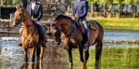 Португалия: Ярмарка лошадей