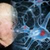 Испания: ученые обещают победить старость к 2045 году