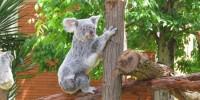 Португалия: Пасхальные выходные в зоопарке