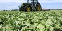 Португалия: прямые выплаты фермерам будут сделаны в октябре