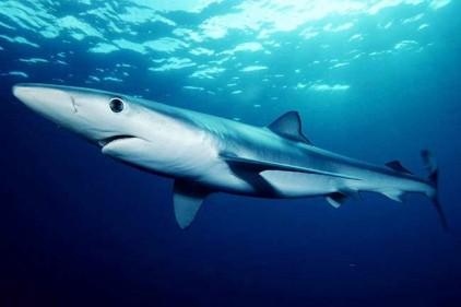 В Испании отдыхающий пострадал от столкновения с акулой