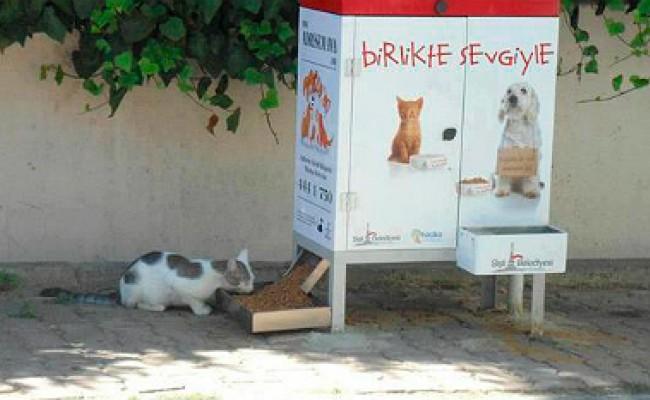 В Турции появились «пункты питания» для бездомных животных