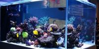 Британцы отравились при чистке аквариума