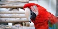 Португалия: активисты - за закрытие зоопарка на Азорах