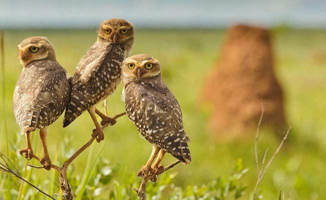 В Испании пройдет охотничья выставка-ярмарка