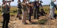 Португалия: фестиваль орнитологии в Сагреше