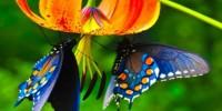 Италия: Вселенная Бабочек в Ботаническом Саду Неаполя