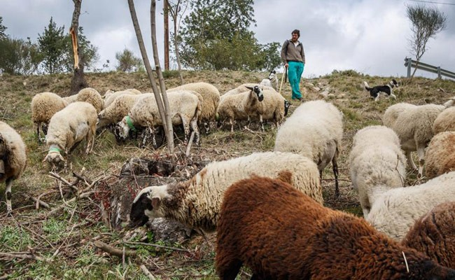 Испания: лагерь для скотоводов