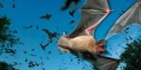 WWF: популяция животных на планете резко сократилась