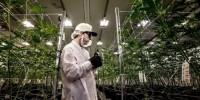 Американский производитель пива решил вложиться в марихуану