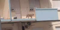 Португалия: собаку заперли на солнцепеке