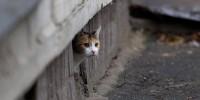 Италия: котам в наследство досталась квартира