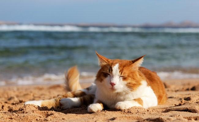 Испания: власти Барселоны стерилизовали 600 кошек