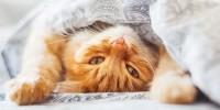 В Италии женщина завещала 30 тысяч евро своему коту