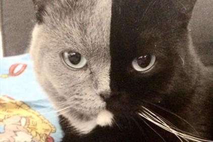 Фотограф показал уникального двуликого кота