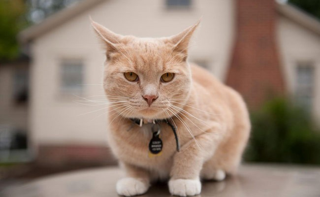Португалия: важная информация для владельцев котов