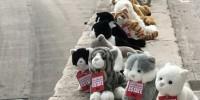 В Италии появилась армия игрушечных кошек