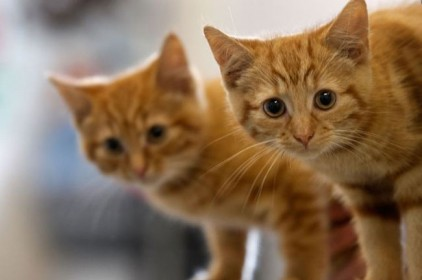 Испания: 101 кота нашли во дворе дома в Малаге