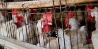 Испания: Lidl отказался от продажи яиц