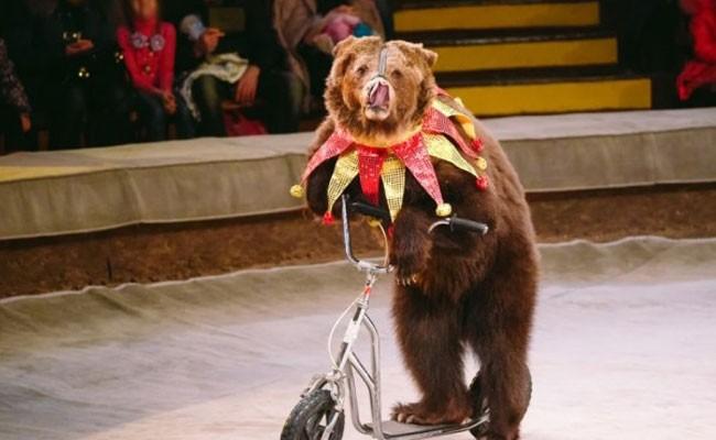 В итальянских цирках больше не будут выступать животные