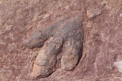 В испанских Пиренеях нашли следы вымершей рептилии