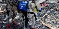 Брошенный хозяевами пес стал спасателем жизней