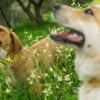Известный курорт Греции поможет бездомным собакам