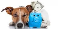 Португалия: НДС на ветеринарные расходы теперь можно вычесть из IRS
