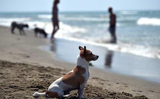 Португалия: новый собачий пляж