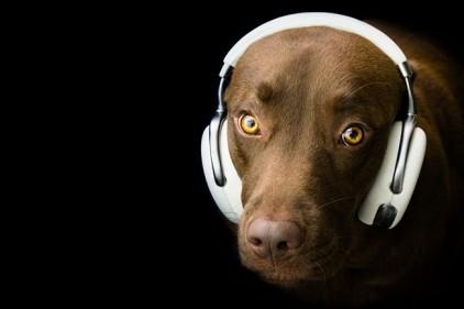 В Испании пройдет первый концерт для собак