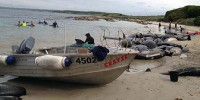 Массовая гибель дельфинов у побережья Австралии