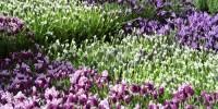 Италия: ароматы весны в Милане